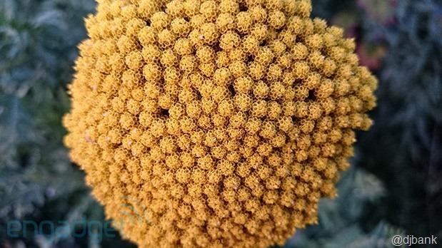 xperia-z1-flower-619
